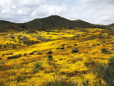 Yellow Valley near Lake Elsinore, April 2019