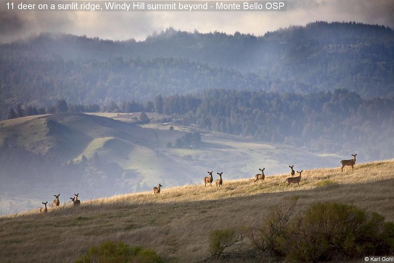 11 deer on a sunlit ridge, Windy Hill summit beyond