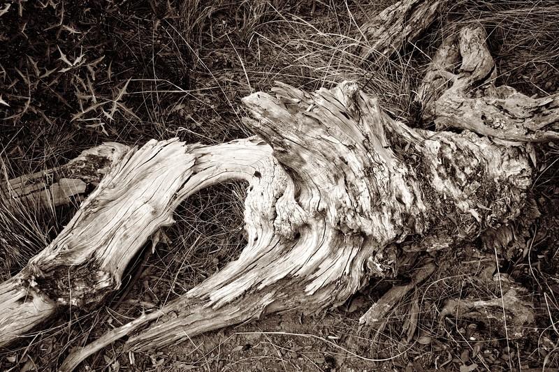 C Photo Lenswork 2007-11-17 Wood Study 2987.jpg