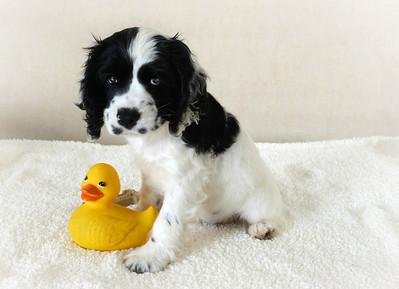 Cheri's puppy