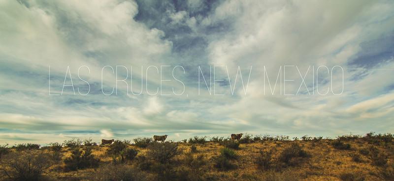 Cattle Grazing Upon the Desert
