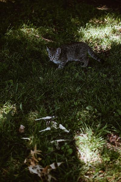 Girls & Kittens, July 1st - 5.jpg