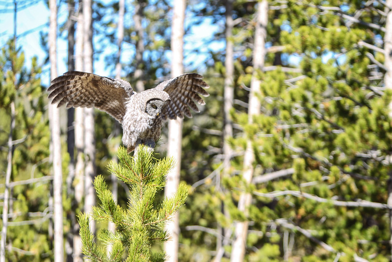 Fall Trip Wyoming & Montana 2016 (102 of 193).jpg