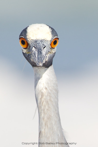 You Lookin' At Me?