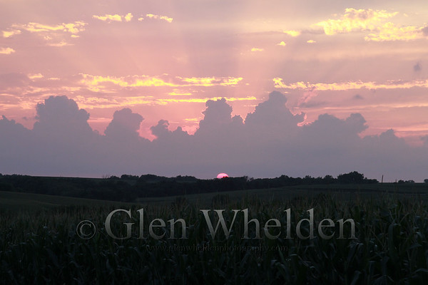 """Sunset Over Corn"""