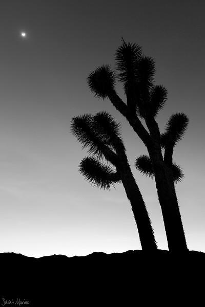 Joshua Tree, Twilight