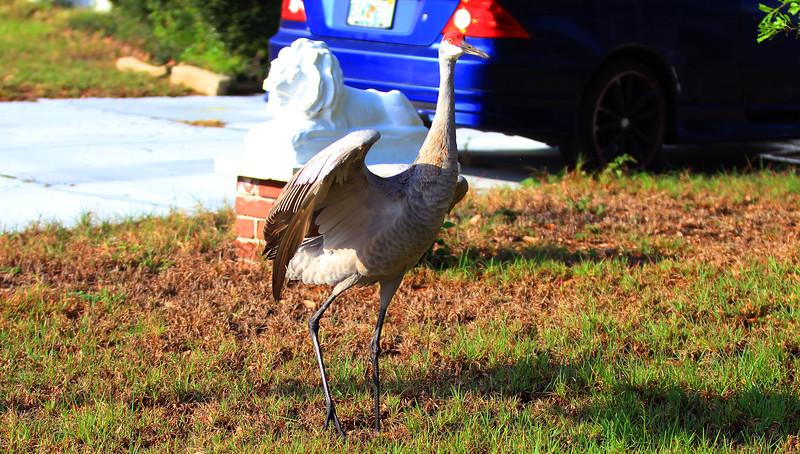 cranes-3-4-19_4827.jpg