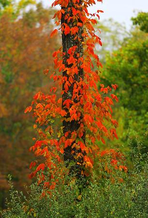 October Colors - 2013