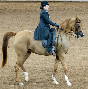 Arabian Horse Show 16 Feb 2020