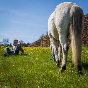 2016 Marius og Dimmu på græs