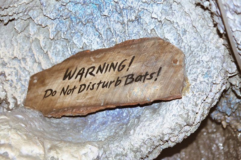 warning do not disturb bats in Indiana Jones ride