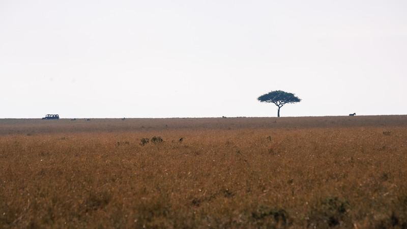 safari-2018-124.jpg