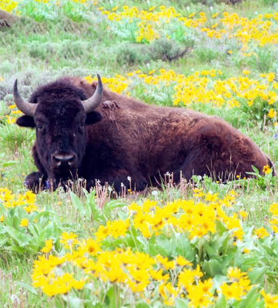 buffaloflowersEnhanced.jpg