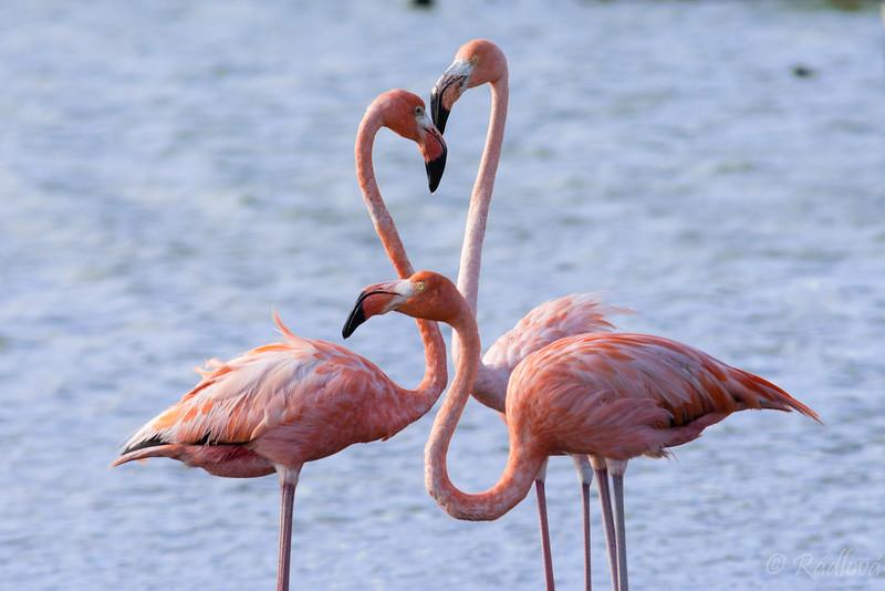 Flamingo consult2-.jpg