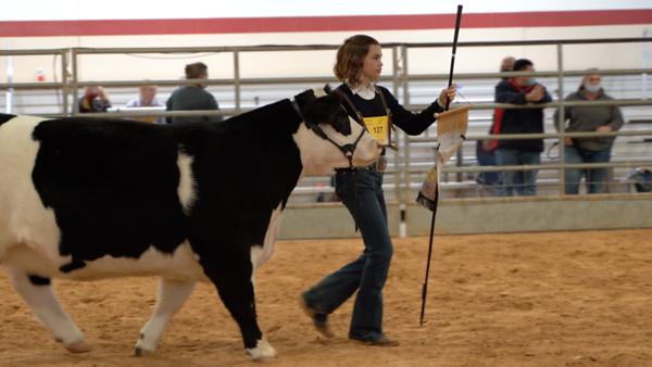 39th Annual CCISD Livestock Show