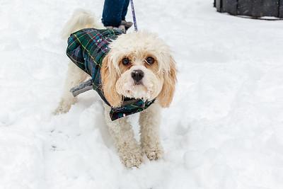 Lila and Kylee after Boston Snowfall - Feb 2019