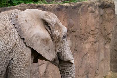 Cleveland Zoo 8/13/13