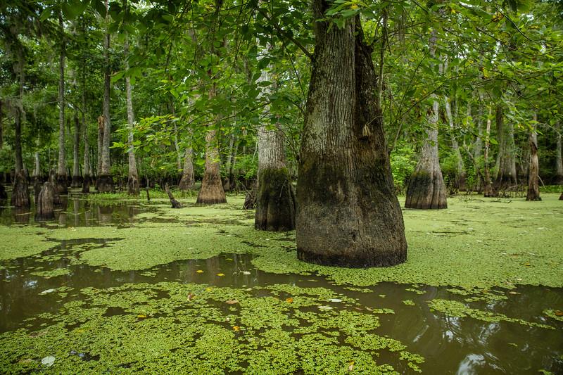 Swamp_-2.jpg