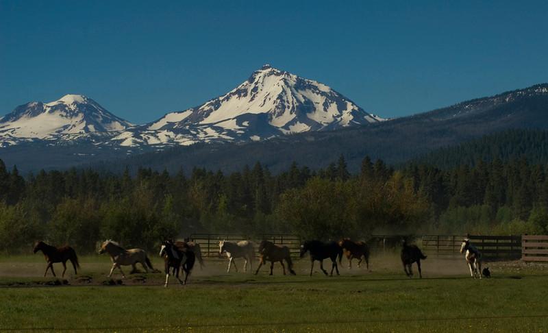 horses wrangling collage_DSC1303.jpg