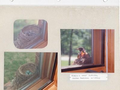 5-10-1993 Robin's nest on bedroom window