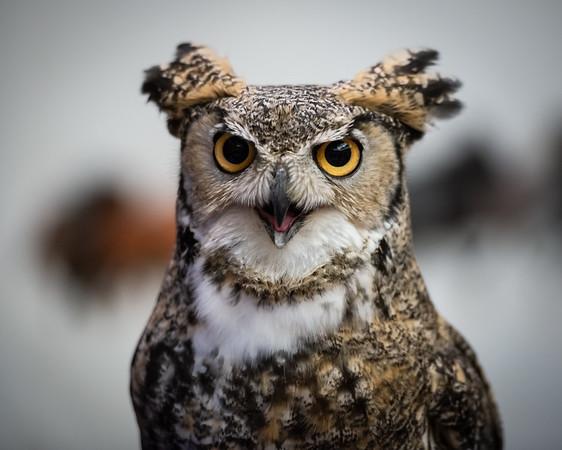 1 Owly Reception