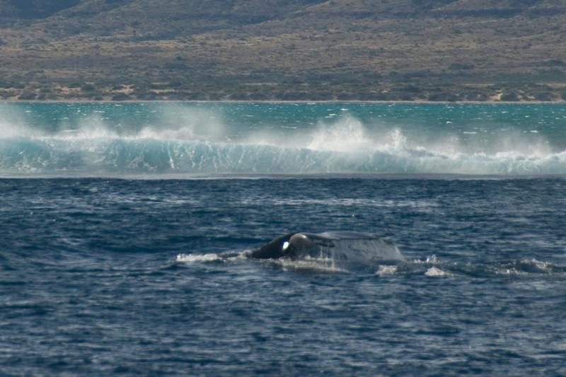 Whale Tail 6 - Exmouth, Western Australia