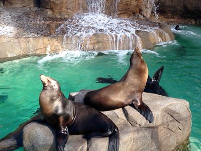 San Diego & Sea World #1411