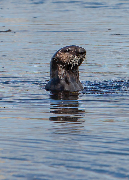 Morrow Bay Otters and AG Roosters-33.jpg