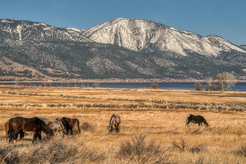 Nevada Mustangs Winter 2020-8.jpg