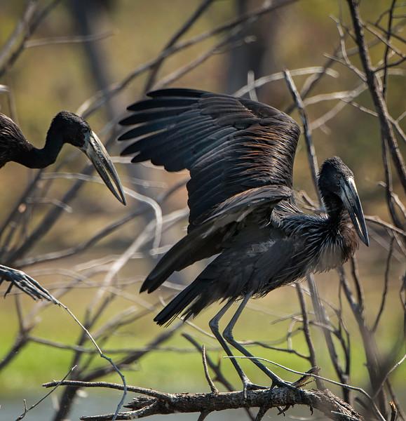 2014-08Aug13-Okavango-436-Edit-Edit-Edit-Edit.jpg