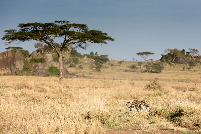 Africa - 101616 - 3721.jpg
