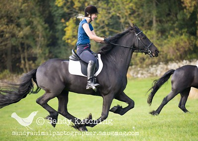 Friesian ride & drive Oct 2015