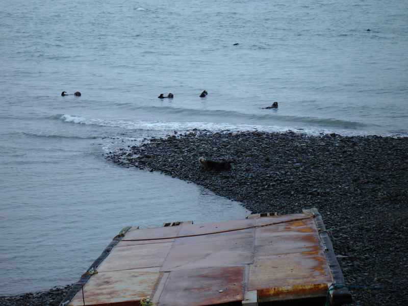 Alaska 2008 023.jpg