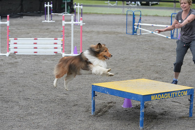 Princeton/Lower Bucks AKC Agility Trial May 20-22