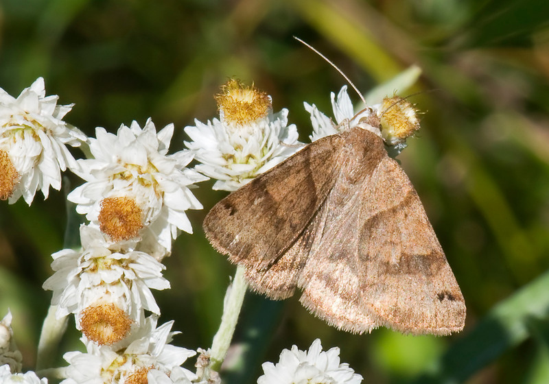 Looper - Clover - Dunning Lake - Itasca County, MN