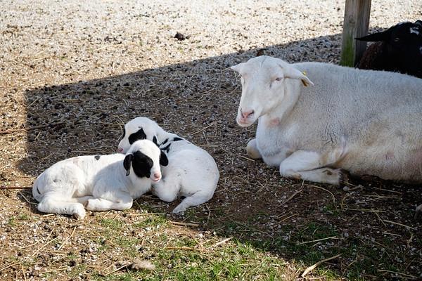 Sleepy Animals Spring 2021