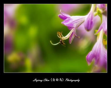 Unknown flower-4
