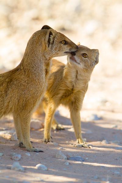 Mongoose-Mongoose.