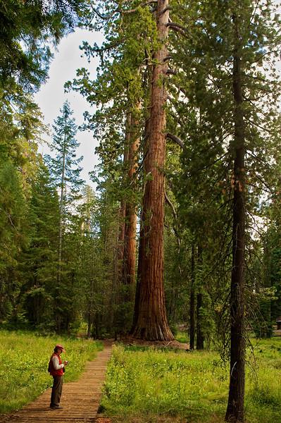 Jenny in Sequoia National Park, California