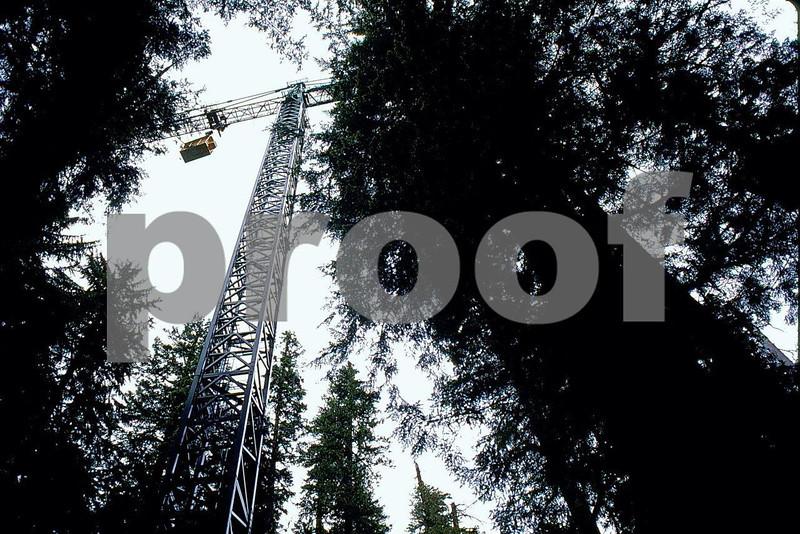 Canopy crane 2.jpg