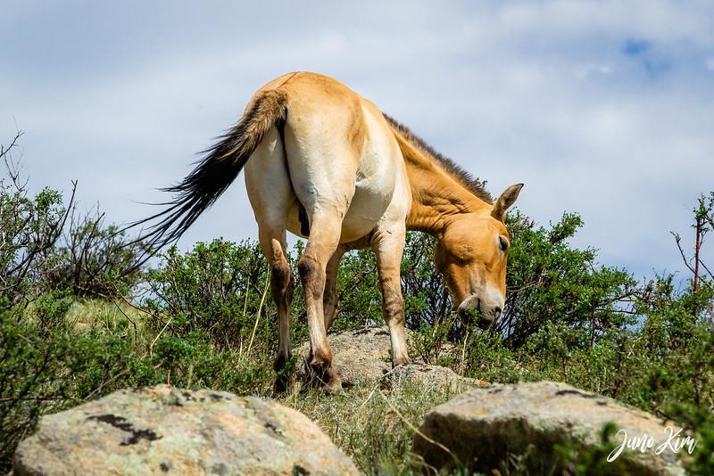 Kustei National Park__6109446-Juno Kim.jpg