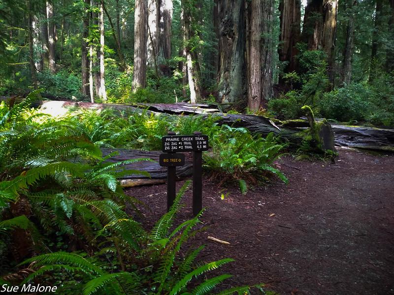 02-13-2021 Redwoods and Coast from Deborah-30.jpg