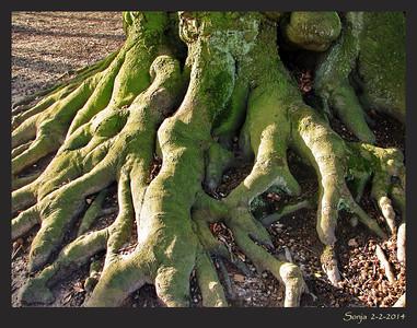 Bomen - Trees