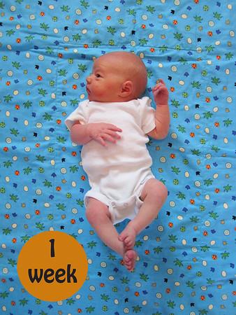 52 Weeks of Owen