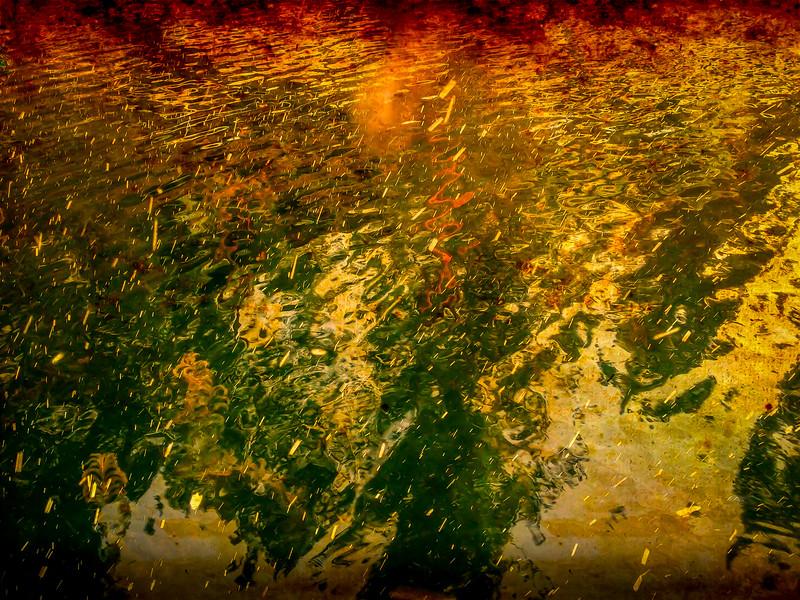 Reflection of the Pines, Liberty Lake, Washington