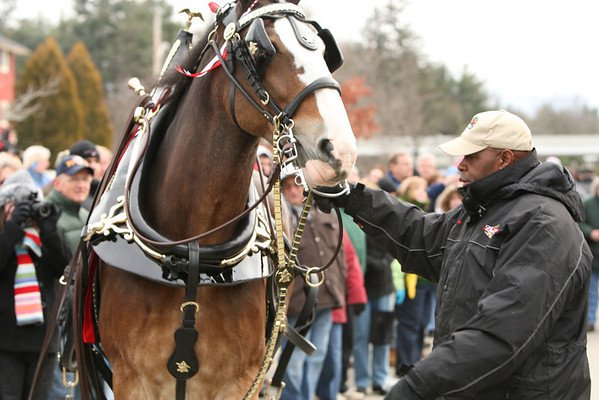 Clydesdales 12-19-09