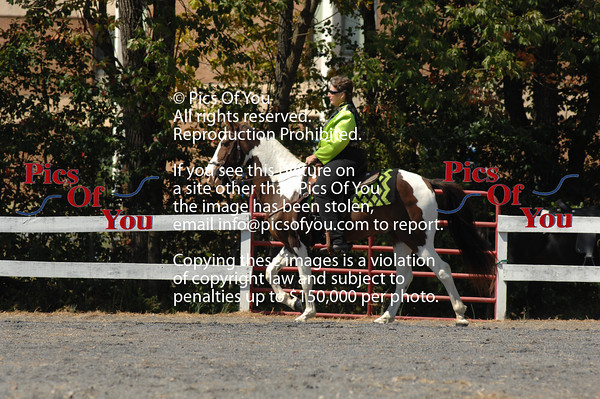 22 Trail Pleasure Spotted Saddle Horse