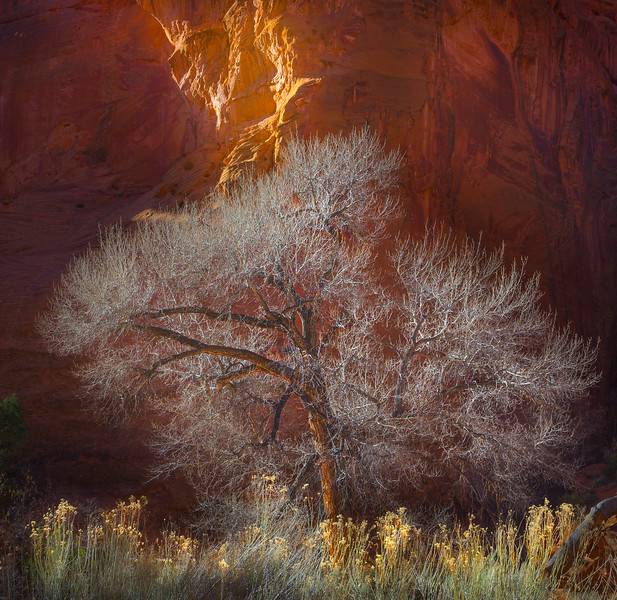 Cottonwood_Escalante National Monument.jpg