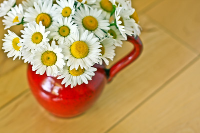 Fresh Picked Daisies