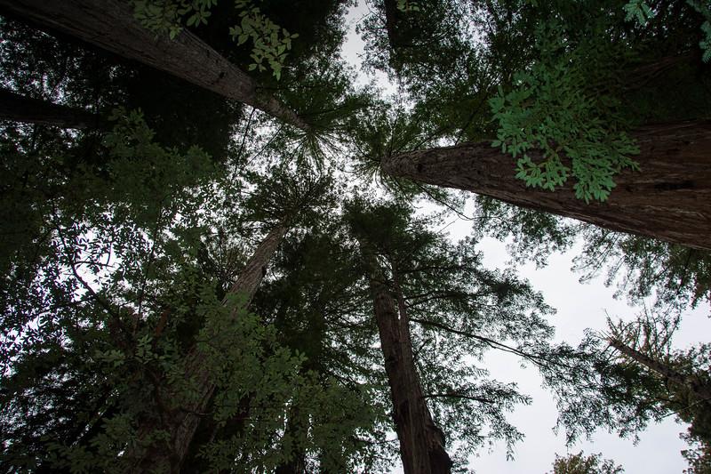Redwood-34.jpg